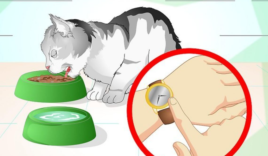 How To Take Care Of Your Cat